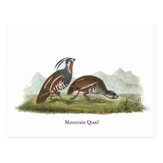 Carte Postale Cailles de montagne, John Audubon