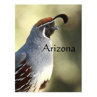 Carte Postale Cailles masculines, Arizona
