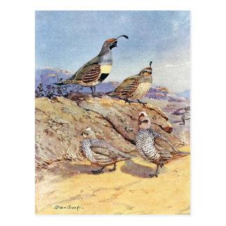 Carte Postale Cailles par des ruisseaux d'Allan