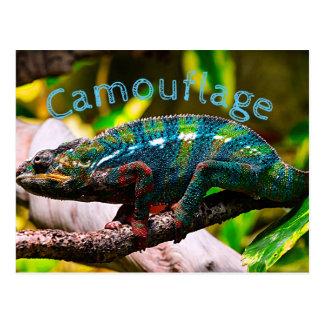 Carte Postale Caméléon coloré