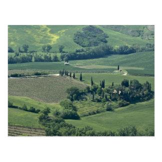 Carte Postale Campagne près de Montepulciano, d'Orcia de Val,