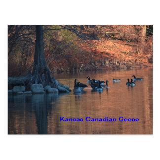 Carte postale canadienne d'oies du Kansas