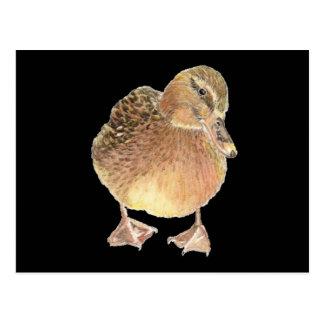 Carte Postale Canard, animal de ferme, animal familier