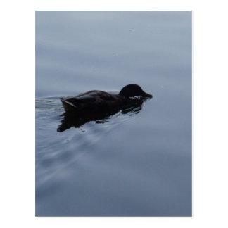 Carte Postale Canard de natation dans le lac, bleu de faune