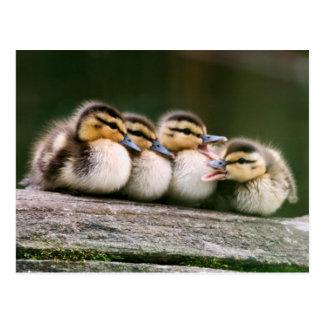Carte Postale Canards de bébé sur le rondin du bois