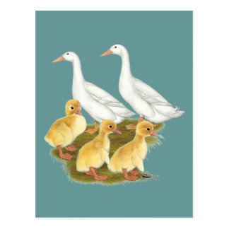 Carte Postale Canards et canetons blancs