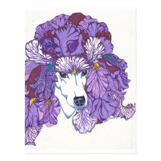 Carte Postale Caniche avec l'iris
