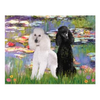 Carte Postale Caniches de Lilies2-Standard (noir et blanc)
