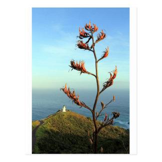 Carte Postale Cap fleurissant Reinga de lin de la Nouvelle