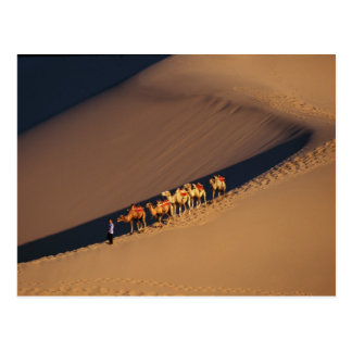 Carte Postale Caravane de chameau sur le désert, Dunhuang, Gansu