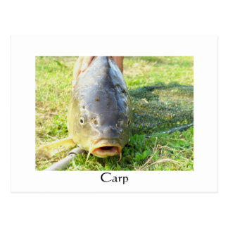 Carte Postale Carpe - Karpfen - Ponty