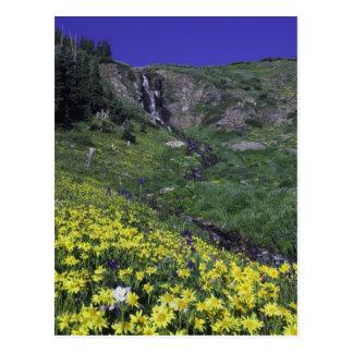 Carte Postale Cascade et fleurs sauvages dans le pré alpin,