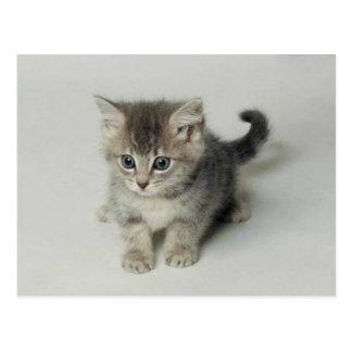 CARTE POSTALE CAT