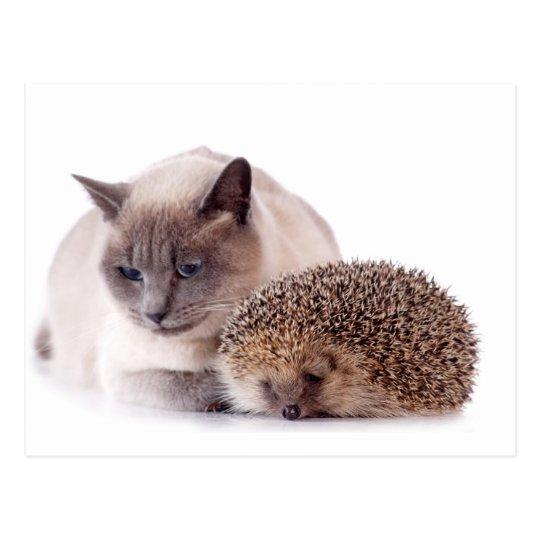 Carte Postale cat and hedgehog