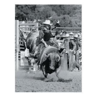 Carte Postale Cavalier accrochant dessus au taureau s'opposant