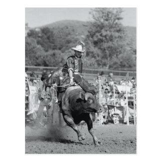 Carte Postale Cavalier accrochant dessus au taureau s'opposant 2