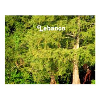 Carte Postale Cèdres du Liban