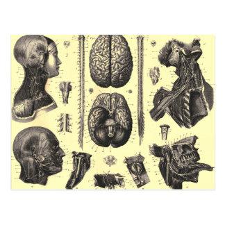 Carte Postale Cerveau anatomique et plus
