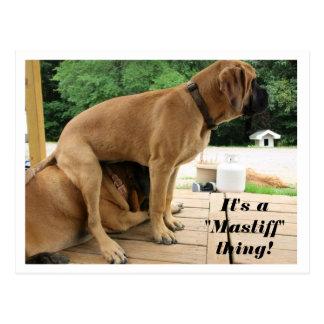 """Carte Postale C'est chose de """"mastiff"""" d'A ! chiens anglais"""