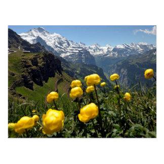 Carte Postale Chaîne de Jungfrau, fleurs sauvages jaunes