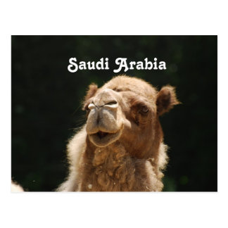 Carte Postale Chameau saoudien