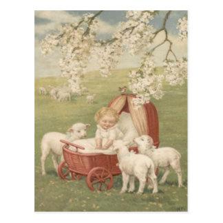 Carte Postale Champ d'arbre de cornouiller d'agneau de bébé