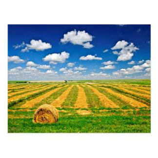 Carte Postale Champ de ferme de blé à la récolte