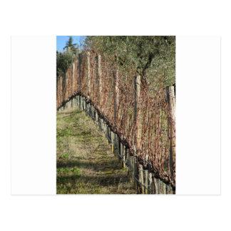 Carte Postale Champ nu de vignoble en hiver. La Toscane, Italie