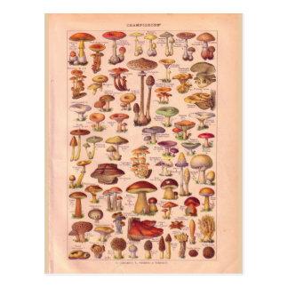 Carte Postale Champignons historiques vintages