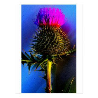 Carte Postale Chardons, la fleur de l'Ecosse