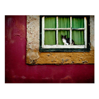 Carte Postale Chat à la fenêtre
