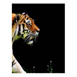 Carte Postale Chat dangereux de fourrure prédatrice de tigre
