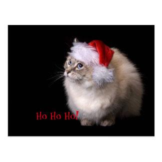 Carte Postale Chat de Ragdoll de Noël