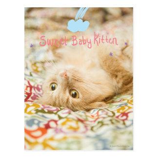 Carte Postale Chat doux de bébé