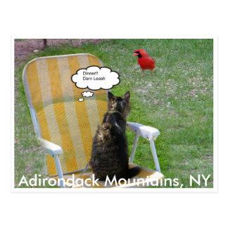 Carte Postale Chat et cardinal, montagnes d'Adirondack, NY