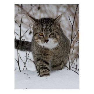 Carte Postale Chat gris mignon dans la neige