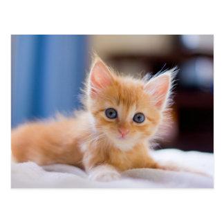 Carte Postale Chat mignon avec des yeux bleus