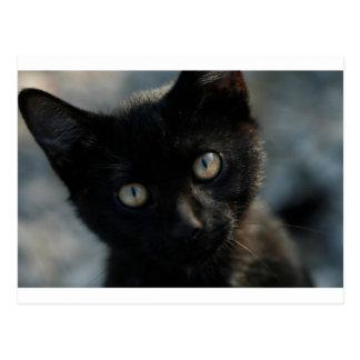 Carte Postale Chat noir d'EEK effrayant