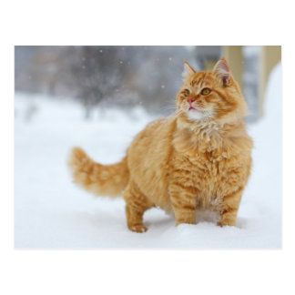 Carte Postale Chat tigré orange dans la neige