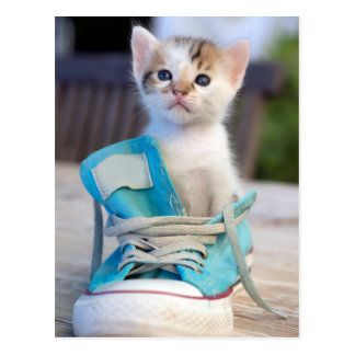 Carte Postale Chaton dans la chaussure bleue