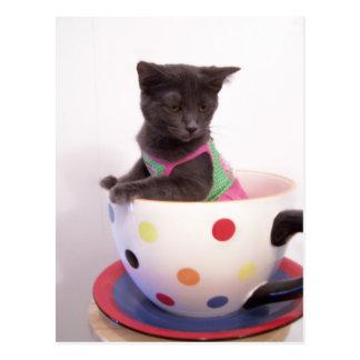 Carte Postale chaton d'arys