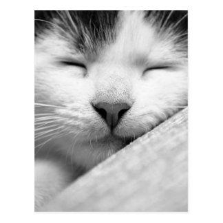 Carte Postale Chaton de sommeil