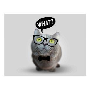 Carte Postale Chaton mignon de chat avec des verres quelle copie