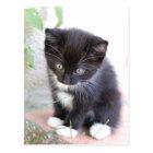Carte Postale Chaton noir et blanc