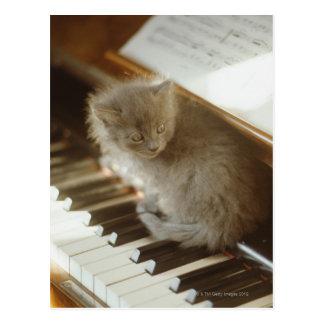 Carte Postale Chaton se reposant sur le clavier de piano, plan