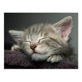 Carte Postale Chaton somnolent