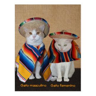 Carte Postale Chats drôles dans des sombreros pour l'amusement