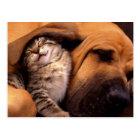 Carte Postale Chats et chiens