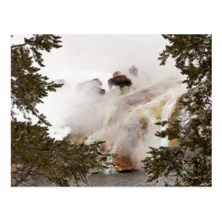 Carte postale chaude et humide de bison