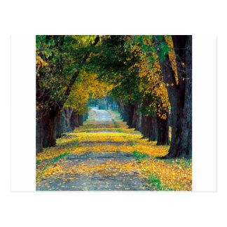 Carte Postale Chaussée Kentucky de Louisville d'arbre